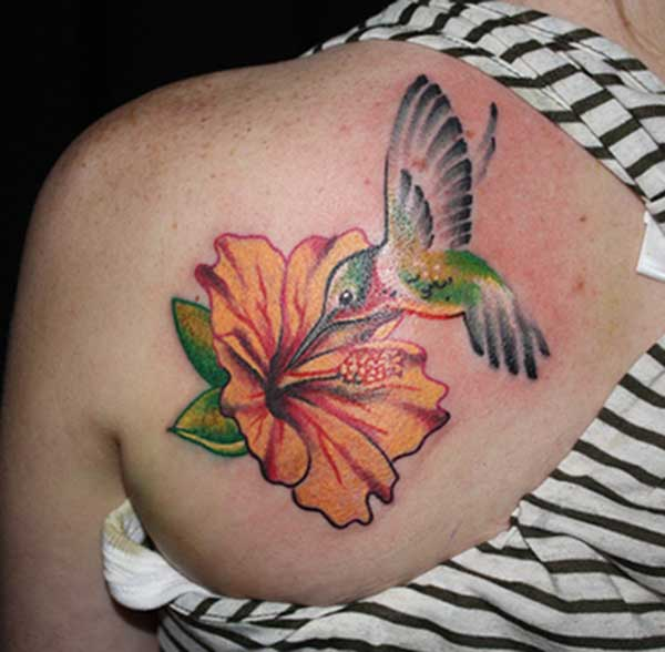 tato hummingbird comel